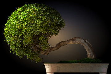 Bonsai tree side view with a black color gradient background.