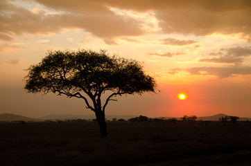 Fotorolgordijn Afrika Setting Sun shinning with single Acacia tree in Africa
