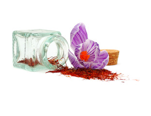 Saffron spice and crocus flower