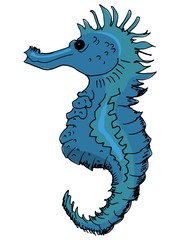 hand drawn illustration of the seahorse on white