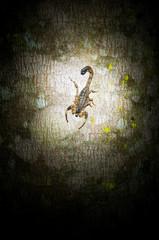 Scorpion on a tree at night