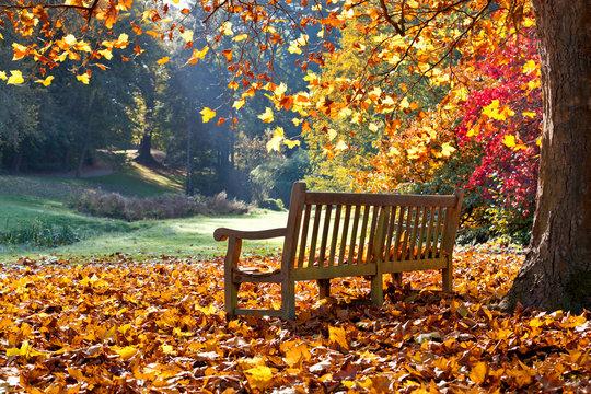 Bench in autumn park.