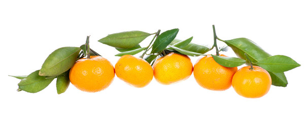 Line of mandarins with leaves