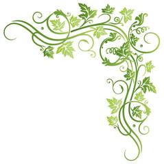 Frühling, Wein, Weinblätter, Blätter, Laub, Ranke