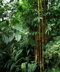 tropical greenhouse scenery