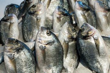 Dorado fish for sale