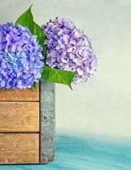 Blue hydrangea flowers in a wooden box