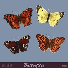 Vector Set Butterflies