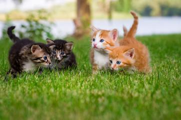 Wall Mural - Four little kittens in garden