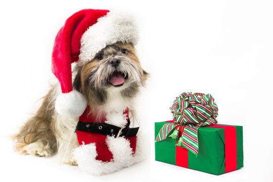 Doggy Santa with a Present