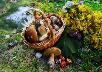 грибы в корзине стоят на мхе