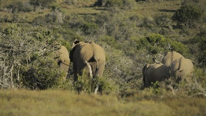 Elefanti a spasso