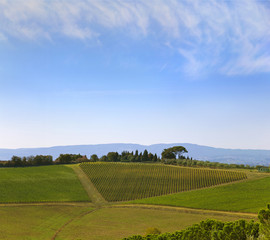Wall Mural - Tuscany countryside by montepulciano