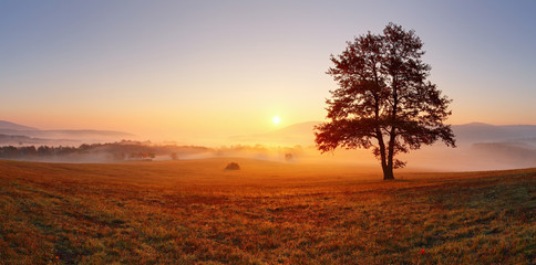 Zelfklevend Fotobehang Donkergrijs Alone tree on meadow at sunset with sun and mist - panorama