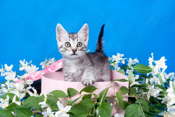 kitten in a box in flowers