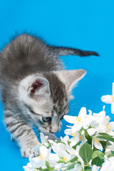 kitten sits in flowers