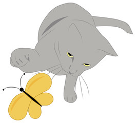 gray cat and butterfly