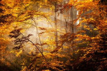 Beautiful autumn woods landscape - fototapety na wymiar