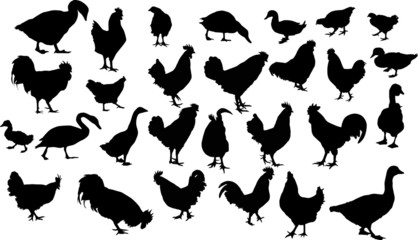 twenty eight farm bird silhouettes