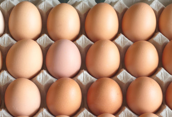 Lot of brown chicken eggs in packaging cells