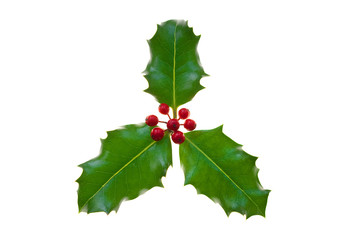 Sprig of holly with berries, isolated on white