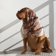A big dog with a scarf, sitting on the balcony in the shade