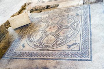 Excavations in Rimini