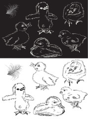monochrome chickens and duckings sketch