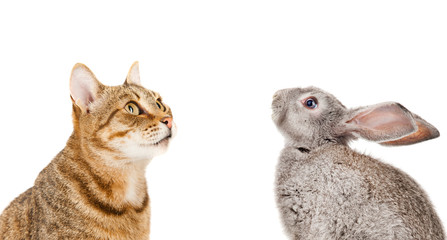 Bunny and cat, isolated on white