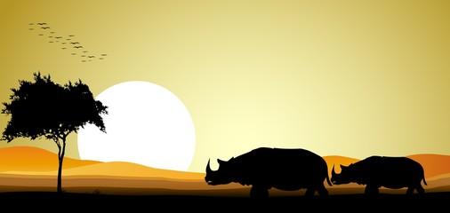 beauty safari of rhino with sunset background