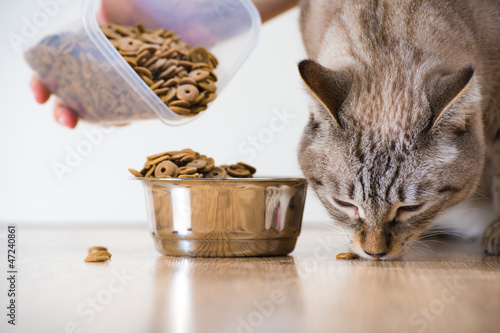 Outdoor cat care tips