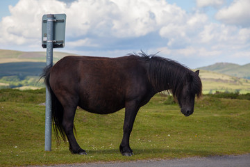 Horse humour / humor - Annoyed pony scratches ass on sign post.