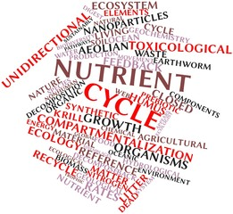 Word cloud for Nutrient cycle