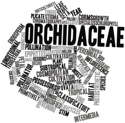 Word cloud for Orchidaceae