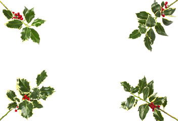 Holly leaf sprigs with red berries