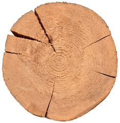 wood crossection