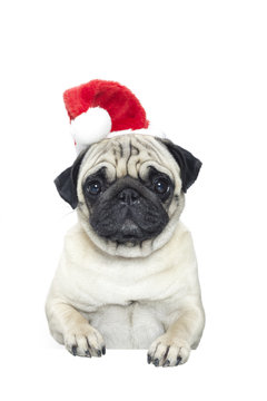Portrait of a pug dog in a Santa Claus hat