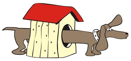dachshund-house