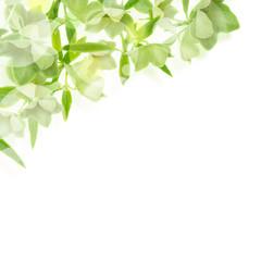 緑の花と葉と光