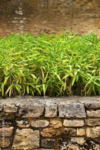 Jardin, zen, bambou, décoration, patio, plante, mur\