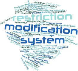 Word cloud for Restriction modification system