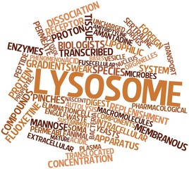 Word cloud for Lysosome