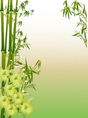 yellow orchids and green bamboo illustration