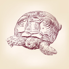 turtle hand drawn