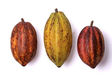 Frische Kakao Früchte