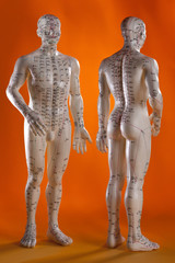 Alternative Medicine - Acupuncture Model