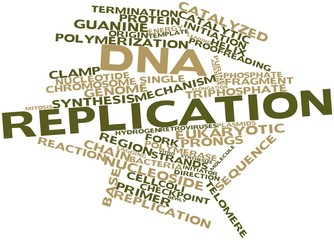 Word cloud for DNA replication