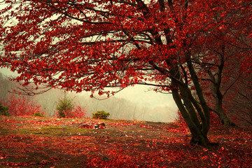 Wall Murals Magenta Beautiful forest during a foggy autumn day