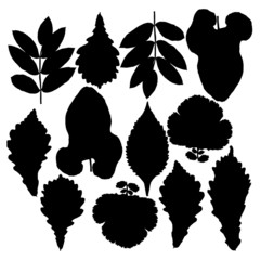 Set of silhouettes of leaves. Isolated on white.