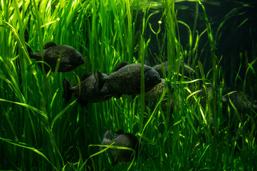 Shot of a school of fish swimming through underwater plants